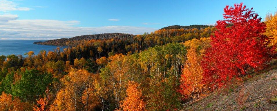 Colorful Minnesota Trees